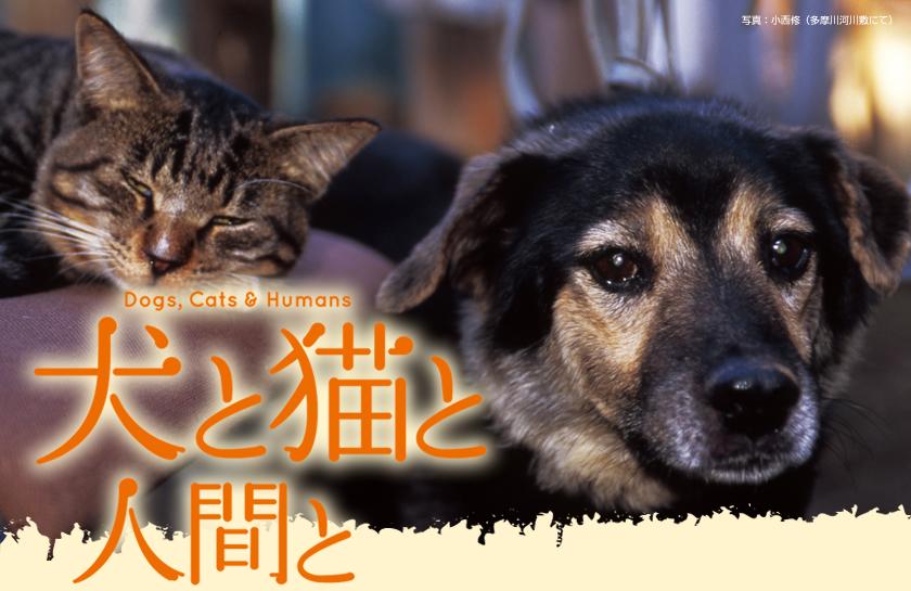 http://www.inunekoningen.com/images/top_01.jpg